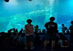 2018년 초등학생 여름방학 문화체험 '해피크닉'